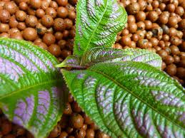 Expanded-Clay-Hydroponics-Systems