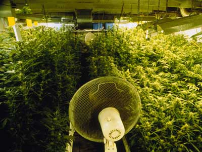 How-to-Set-Up-Grow-Room-Ventilation