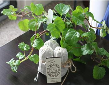 Organic-Hydroponic-Tea