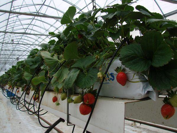 eat-hydroponic