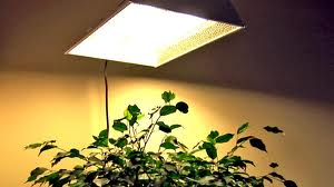 how-does-light-effect-how-plants-grow-in-hydroponics