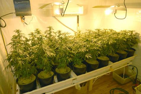 hydroponics-grow-room
