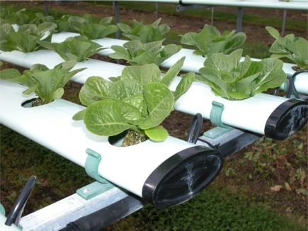 what-is-hydroponics